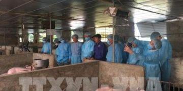 Đức sẵn sàng chia sẻ kinh nghiệm phòng, chống bệnh tả lợn châu Phi